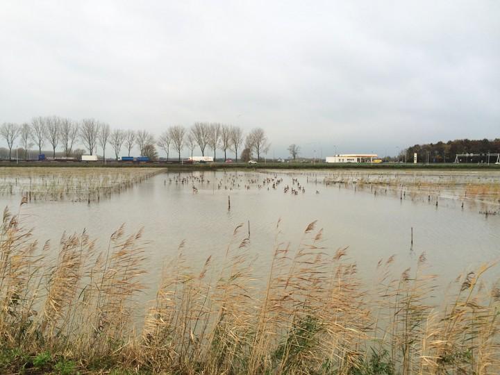 Riet deelgebied Waterberging ingeplant en beschermd