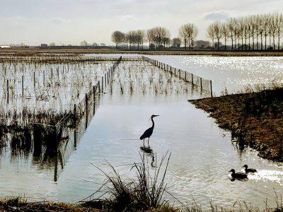 Radio Gelderland: Waterrijk in Park Lingezegen
