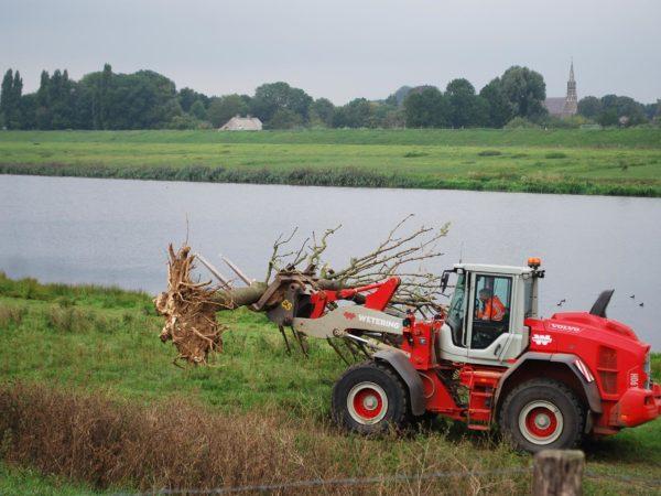 Nieuw leven voor dode bomen
